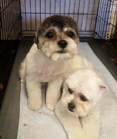 Cwtsh Cuts Dog And Cat Grooming