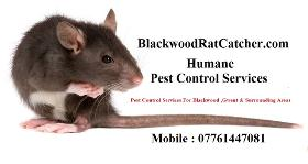 Blackwood Pest Control Services