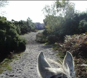Green Cottage Riding School Centre, Livery Stables & New Forest Pony Stud.