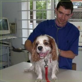 Hollycroft Veterinary Centre Limited