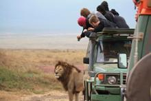Absolute Africa - Tour Operators in Chiswick W4 2HL - 192 com